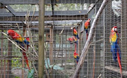 Copan - Macaw Mountain Bird Park - Grande volière pour les aras...