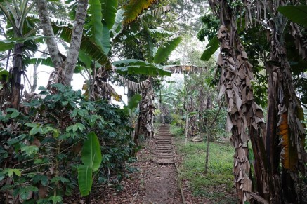 Plantation Welchez – Coffee Tour