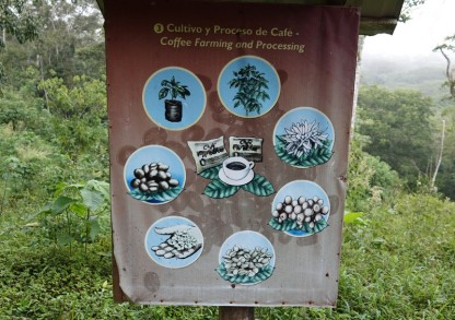 Plantation Welchez – Coffee Tour - Cycle de la production de café