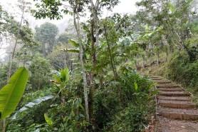 Plantation Welchez – Coffee Tour
