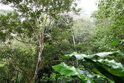 Plantation Welchez – Coffee Tour - Vue depuis le restaurant