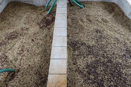 Plantation Welchez – Coffee Tour - Lavage