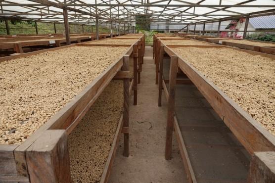 Plantation Welchez – Coffee Tour - Séchoir