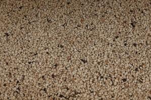 Plantation Welchez – Coffee Tour - Grains de café au séchoir