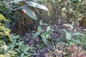 Copan - Hacienda San Lucas - Petite balade à pied...