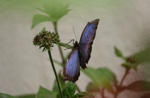 Reserva Natural Atitlan - Serre aux papillons