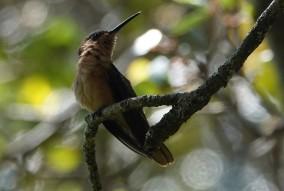 Panajachel - Journée à l'hôtel San Buenaventura - Ici, il y a vraiment beaucoup de colibris !