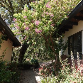 San Cristobal de las Casas - Orquídeas Moxviquil - Jardin botanique