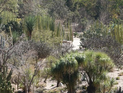 Oaxaca - Vue depuis le Museo de las Culturas (Santo Domingo) sur le Jardin Etnobotanico