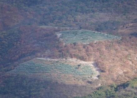 Hierve El Agua - Champs d'agaves au loin