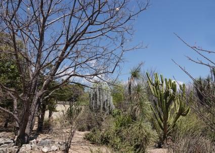 Oaxaca - Jardin ethnobotanique
