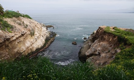 La Jolla - Coast Walk Trail