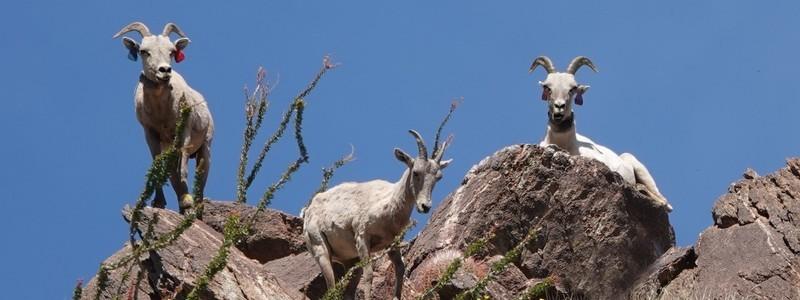 De San Diego à Palm Springs, par le désert d'Anza-Borrego : un magnifique parcours!