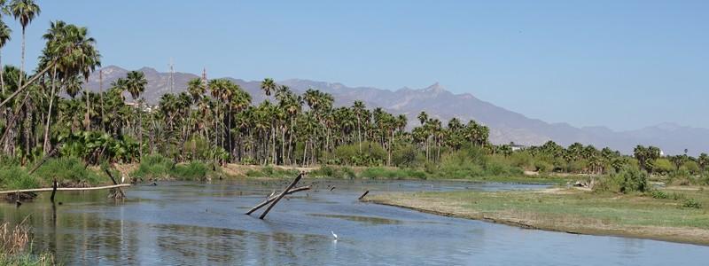 Balade ornithologique à San José del Cabo et mini-golf à Cabo San Lucas!