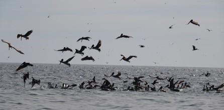 Loreto - Excursion sur l'ile Coronado