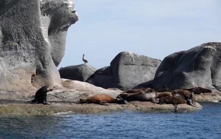 Loreto - Excursion sur l'ile Coronado - Otaries