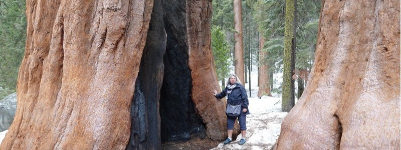 A l'ombre des arbres géants, au Sequoia NationalPark