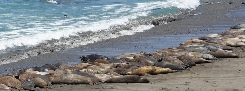 Toujours le long de la côte Pacifique, de Big Sur à Los Angeles, via Lompoc : une merveille!