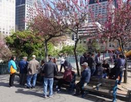 San Francisco - Chinatown - Parc où de nombreux Chinois se retrouvent pour jouer aux cartes