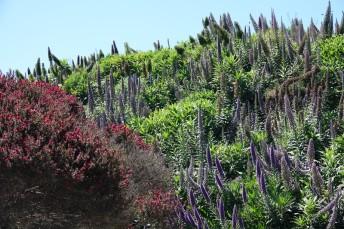 San Francisco - Balade à pied sur le coastal trail - Crissy Field