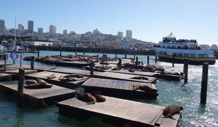 San Francisco - Balade à pied sur le coastal trail - Pier 39 - Pontons réservés aux otaries !