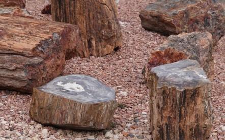 Bryce Canyon - Ruby's Inn - Bois pétrifié