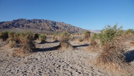 Death Valley National Park - Surprenant plantes qui poussent sur de petits monticules de terre...