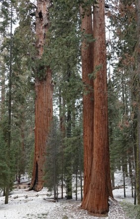 Sequoia National Park - Giant Forest