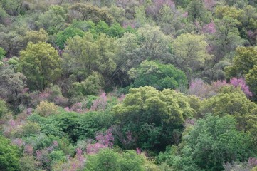 Sequoia National Park - Foothills