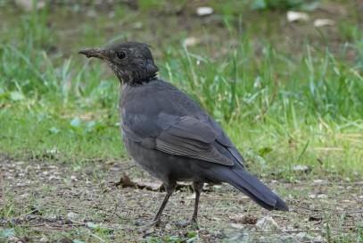 Funtana - Observation d'oiseaux au camping