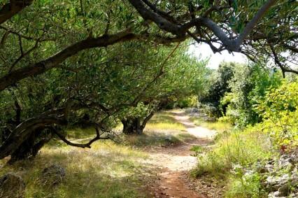 Punat - Balade à pied