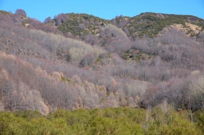 Etna Sud - Sur la SP92, en direction de Zafferana - Belle végétation