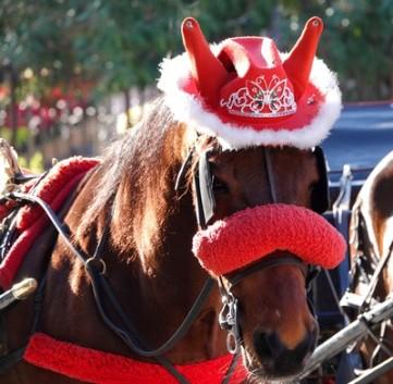 Palerme - Devant le Théâtre Massimo, calèches et chevaux attendent les touristes...