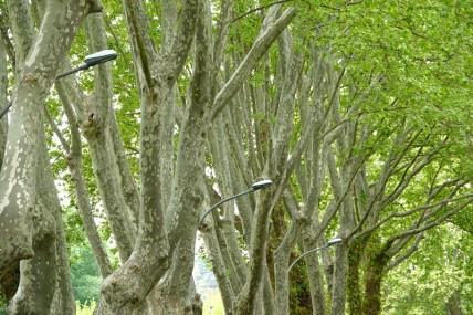 Avignon - Balade dans le camping - On a vraiment l'impression que les lampadaires sortent des arbres !