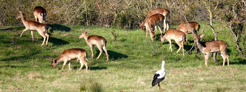 De Peralada au parc naturel des Aiguamolls, deux belles balades au cœur de l'AltEmpordà…