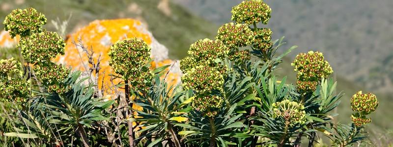 Retour au cap Norfeu pour une balade botanique toute printanière!