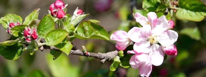 Bain de fleurs à Roses : une jolie rando bien bucolique dans la sierra!
