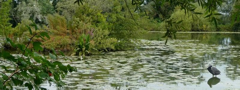 Que d'eau à Saint Omer et dans le maraisaudomarois!